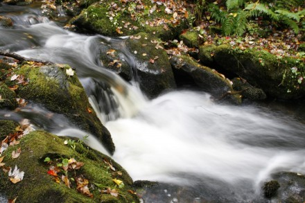A stream rushes over moss-covered stones sprinkled with fall leaves. ©Joshua Brockman 2010. All Rights Reserved.
