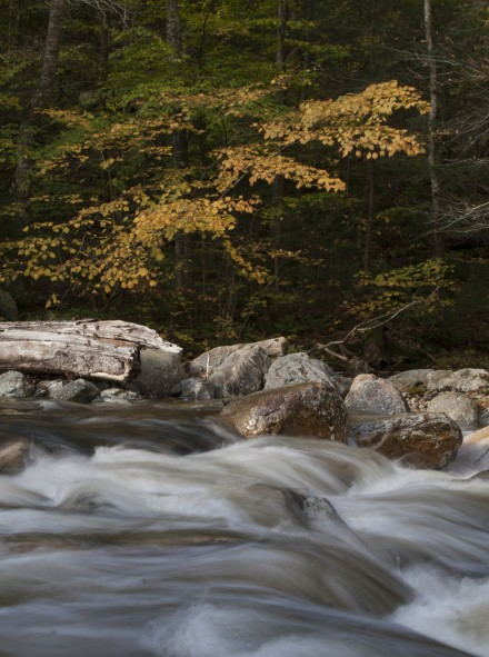 A river flows past trees with bright yellow fall foliage. ©Joshua Brockman 2010. All Rights Reserved.